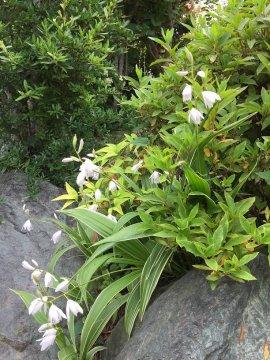5月の庭3