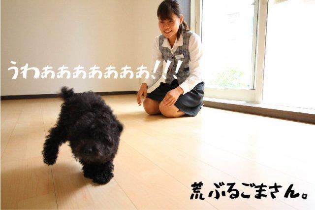 ペット可 黒プー 東大宮05