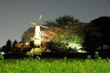 見晴公園の夜桜