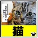 京都 山科区 醍醐 賃貸 ペット可 猫