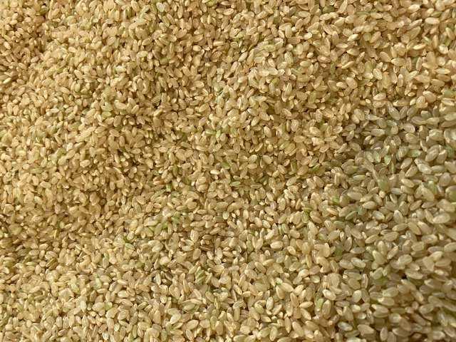 生のお米は少し青い! 初めて知りました。
