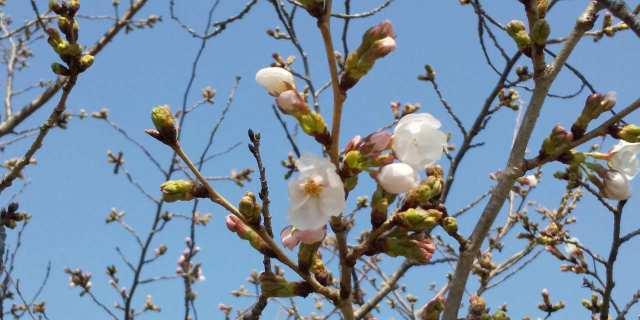 【稲美町国北の新築一戸建て】南側の桜並木のご紹介♪
