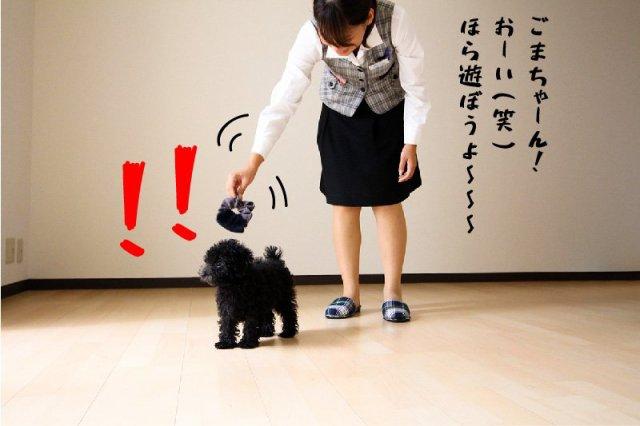 ペット可 黒プー 東大宮06