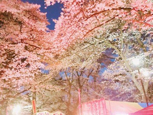 こちらは昨年の大宮公園の桜です
