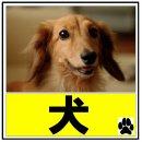 京都 山科区 醍醐 賃貸 ペット可 犬