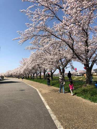 武庫川桜づつみ回廊