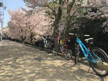 堀と自転車と桜