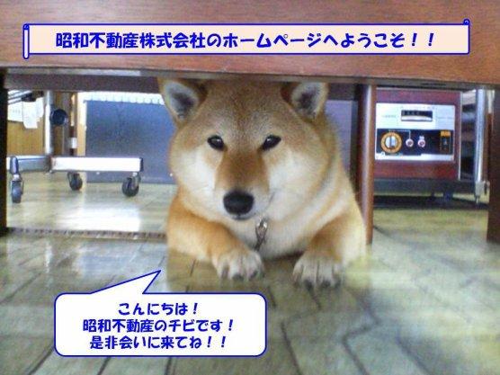 昭和不動産株式会社にお気軽にご来店ください。