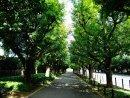 新宿町名と歴史