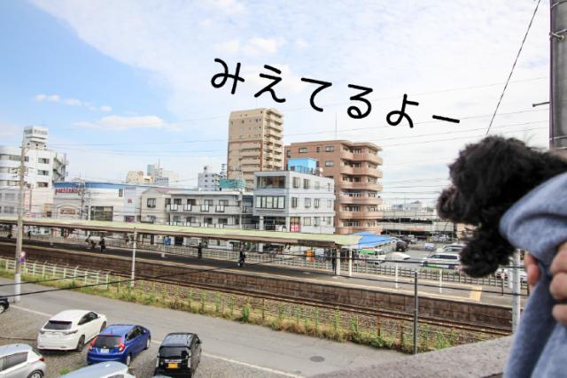 東大宮 ペット可03