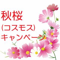 秋桜キャンペーン