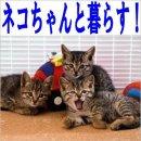 園田のネコ飼育可能物件特集