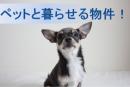 石神井公園でペットと一緒に住む!