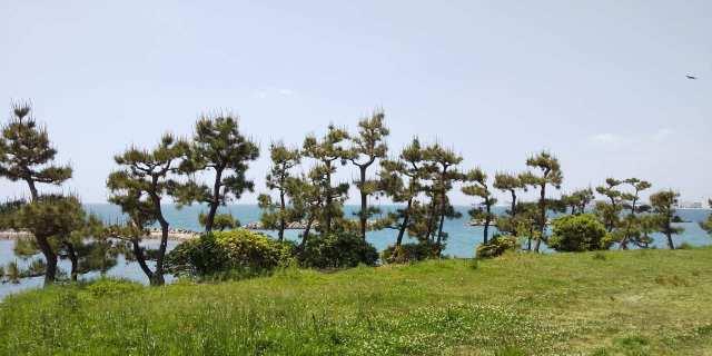 住吉神社(明石市魚住町中尾)の松林と海