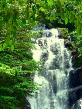 白糸の滝は夏がおすすめ♪