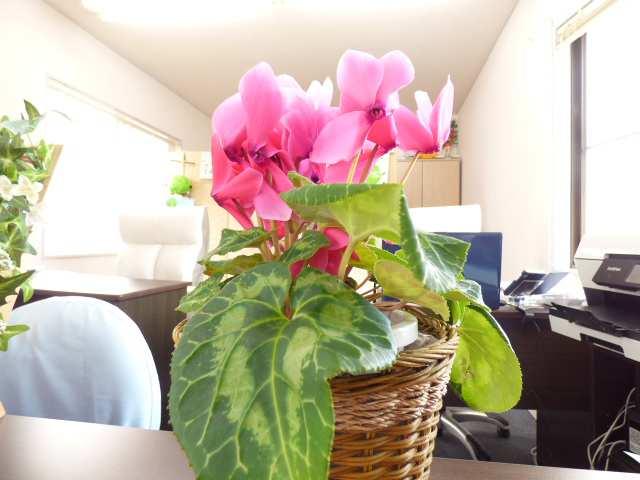 フジ不動産店内のご紹介♪お花がきれいに♪