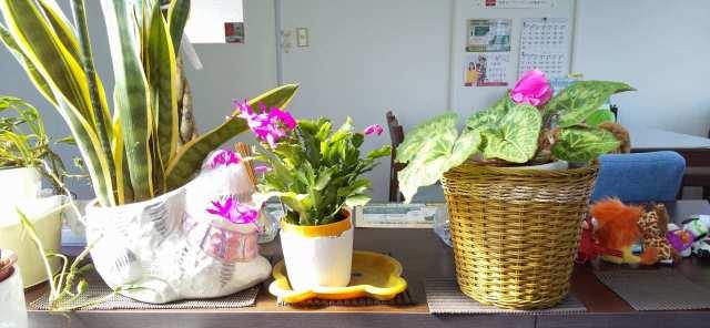 お花が咲きはじめました♪フジ不動産店内の様子♪