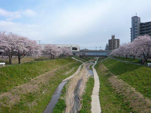 笊川の春のとある風景