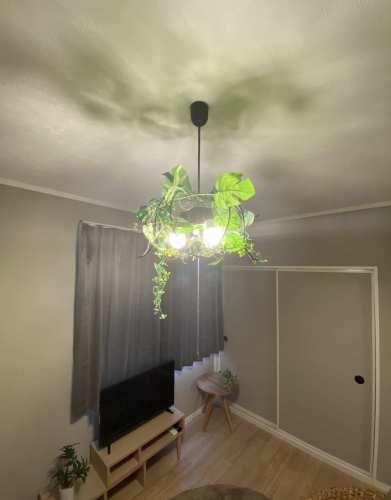 フェイクグリーンライト01