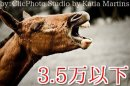 3.5万円以下