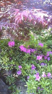 濃いピンクの花